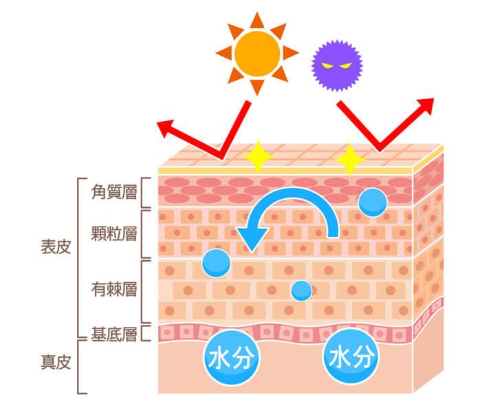 肌には、外界から異物やウィルスが入ったり、乾燥したりするのを防ぐ「バリア機能」が備わってます。
